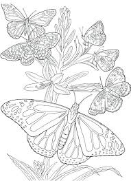 detailed butterfly coloring pages for adults free adult coloring pages to print heartscollective co