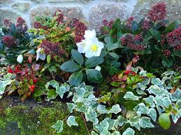 planting containers for winter colour u2013 the frustrated gardener