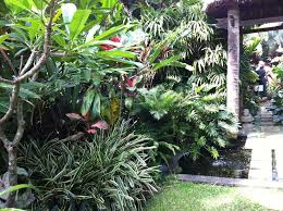 627 best tropical images on pinterest tropical garden