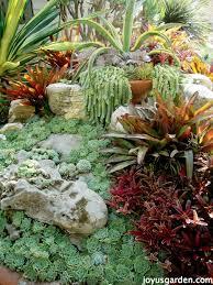 Fern Rock Garden Apartments How To Care For Propagate Sedum Morganianum Aka Burro S