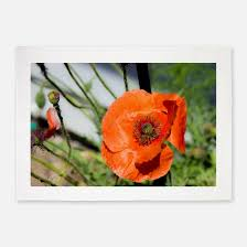 Poppy Area Rug Orange Poppy Rugs Orange Poppy Area Rugs Indoor Outdoor Rugs