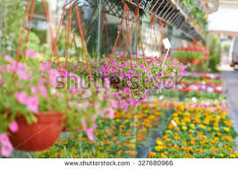 flower nursery stock images royalty free images u0026 vectors