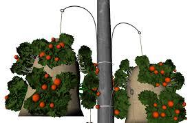 guerrilla gardener u0027s blog blog archive hanging vegetable garden