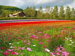 flower places hokkaido japan furano flower fields farm tomita boutique japan