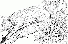 big cat coloring pages 11529