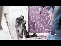 runnin c australian shepherds magic u0027s tv commercial youtube