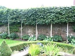 Privacy Garden Ideas Fast Growing Trees Backyard Privacy Best Privacy Trees Ideas On