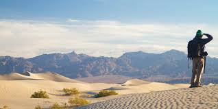 native plants grow on the sand dunes at this beach stock photo mesquite flat sand dunes visit california