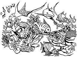 coral reef fish coral reef fish predators gathering coloring