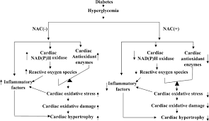 downregulation of nadph oxidase antioxidant enzymes and