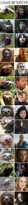 Sloth Meme Jokes - 22 viral sloth videos in 2018 ever viral viral videos