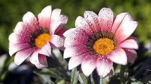 beautiful plants plants beautiful flower 48938 image httpwww desktopwallpaperhd