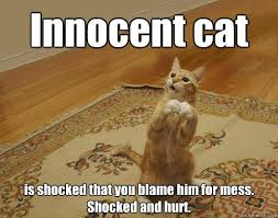 Mess Meme - innocent cat is shocked that you blame him for mess shocked and