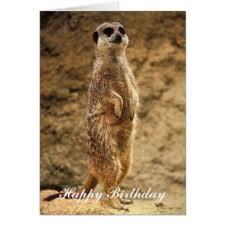 funny meerkat greeting cards zazzle