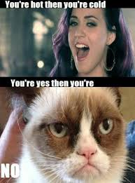 Grumpy Cat Yes Meme - 33 best the grumpy cat images on pinterest grumpy cat funny