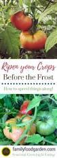 8360 best vegetable gardening images on pinterest gardening