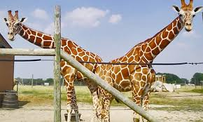 Ohio wildlife tours images African safari wildlife park port clinton oh groupon jpg