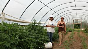 pesticide drift threatens organic farms the salt npr