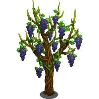 grape vine tree farmville wiki fandom powered by wikia