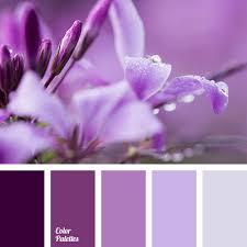 lilac color lilac shades color palette ideas