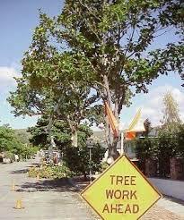 tree maintenance ventura ca