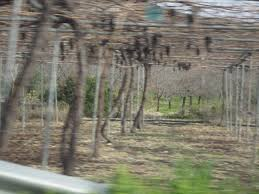 cyprus wines elizabethsvines