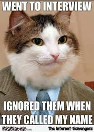 Tuesday Funny Memes - cat goes to an interview funny meme pmslweb