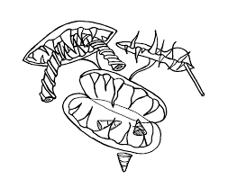 venus fly trap coloring pages download flowers free download