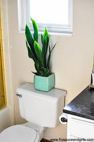 home interior plants 10 places to decorate your home with indoor plants