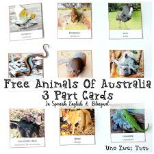 diy animals of australia 3 part cards free bilingual printable