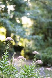 garden visit a fern filled forest in australia gardenista