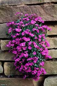 100 best rock garden plants in the world home and gardens