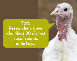 turkey trivia farm sanctuary