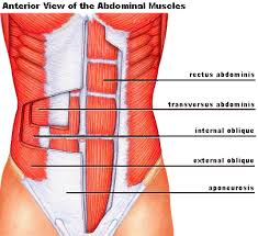 Vaccum Abs 2 Moves For Awesome Abs Ryan Munsey