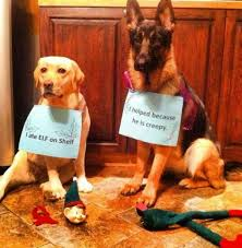 Christmas Dog Meme - happy merry christmas day 2017 jersey dogs happy christmas day