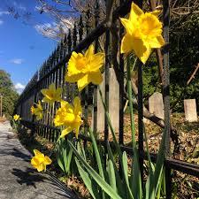 flowers oakland cemetery