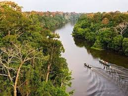 canopy amazon machu picchu amazon jungle tour 4 5 peru rainforest trip