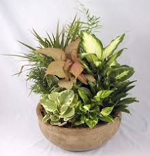 funeral plants dish garden with green plants funeral birthday office and more