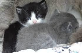 enlever odeur urine de sur canapé comment repousser les chats inspirations avec enlever odeur urine