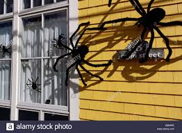 giant spiders stock photos u0026 giant spiders stock images alamy