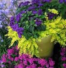 garden pictures u0026 photos gardens container gardening and potato