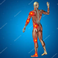 3d Human Anatomy 3d Human Or Man With Muscles For Anatomy Or Health Designs With