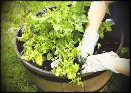 Vegetable Pot Gardening For Beginners Vegetable Gardening For Beginners Gardener S Supply Home Garden