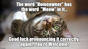 Good Luck Cat Meme - the word homeowner has the word meow in it good luck