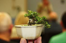 tiny trees with bob and terry swindon district bonsai