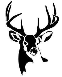 whitetail buck deer gif 788 980 awesome stuff pinterest