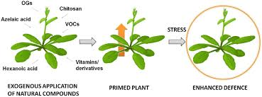 frontiers priming of plant resistance by natural compounds