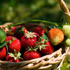 neudorff strawberry fragaria x ananassa