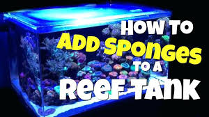 reef tank lighting schedule reef tank lighting in video we are taking a look at how to add
