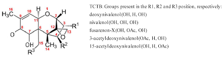 toxins free full text effect of deoxynivalenol and other type